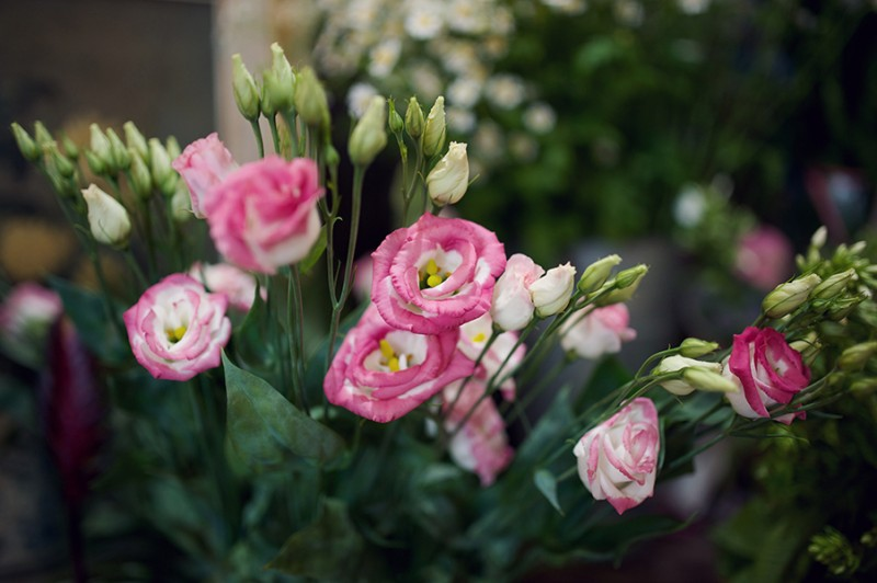 Flowers-by-SP-Retail-Photography-by-Rebecca-Douglas-Photography-0065